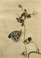 Butterfly Study 1   pen and ink   1985   Private Collection