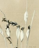 Floral Study   Pen, ink, watercolour   1968   Private Collection