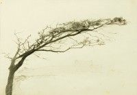 Tree Study   Pencil   c. 1980   Private Collection